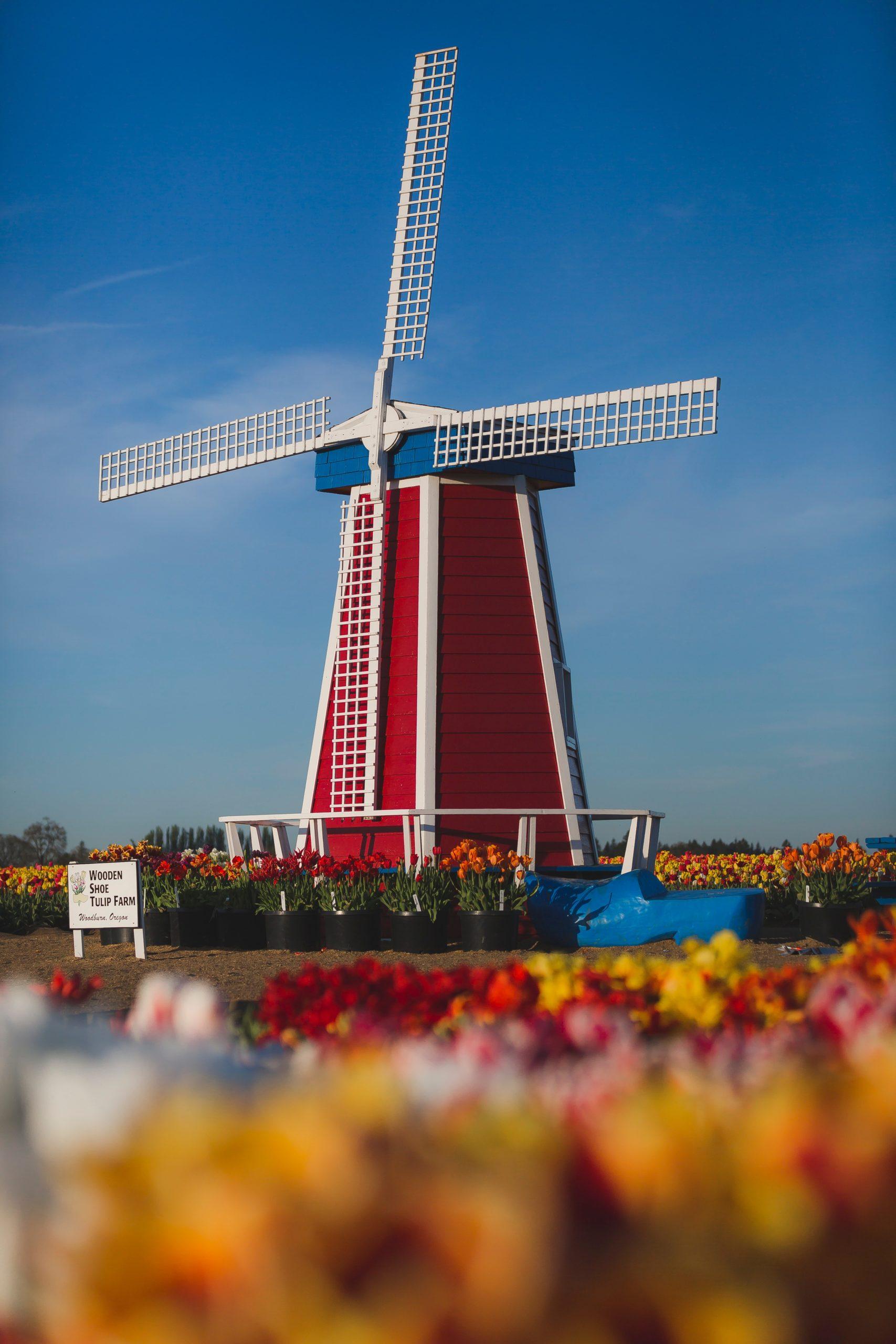 moulin rouge et blanc